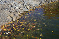 Autumn leaves floating in water Stock Images