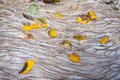 Autumn leaves on foam water in a stream Stock Photo