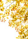 Autumn leaves foliage border Royalty Free Stock Photo