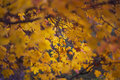 Autumn and leaves fragment of fading foliage in park Royalty Free Stock Images
