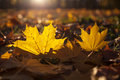 Autumn and leaves fragment of fading foliage in park Royalty Free Stock Photo