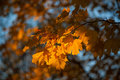 Autumn and leaves fragment of fading foliage in park Stock Photo