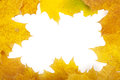 Autumn leaves frame yellow closeup Royalty Free Stock Photo