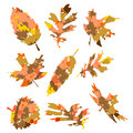 Autumn leaves in front of an white background Royalty Free Stock Images
