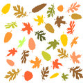 Autumn leaves in front of an white background Stock Image
