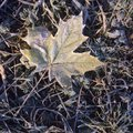 Autumn leaves in frost freeze on a ground Stock Image