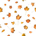 Autumn leaves with glowing back light seamless studio photographed a enhancing the colors naturally isolated on white Stock Photos