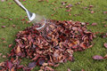 Autumn leaves on grass lawn Stock Image