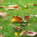 Autumn leaves on green grass Royalty Free Stock Photo