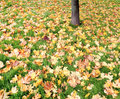 Autumn leaves on green grass Royalty Free Stock Photography