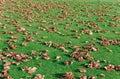 Jeseň listy na zelená tráva