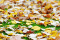 Autumn leaves on green grass Royalty Free Stock Photos