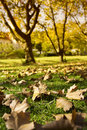 Title: Autumn leaves on green lawn with trees in background