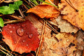 Autumn leaves on the ground after rain Royalty Free Stock Images