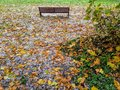 Autumn leaves on the ground and ice rain. A bench alone in the park Royalty Free Stock Photo