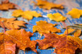 Autumn leaves on the grunge wooden cyan desk Royalty Free Stock Photo