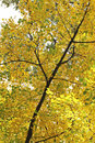 Autumn leaves in the Hofgarten, Dusseldorf Royalty Free Stock Photos