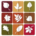 Autumn leaves icon red yellow and green leaves of forest trees are used as buttons for web design Royalty Free Stock Photography