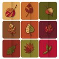 Autumn leaves icon red yellow and green leaves of forest trees are used as buttons for web design Stock Photography