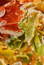 Autumn leaves icy in after ice rain Royalty Free Stock Photography