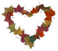 Autumn leaves isolated heart Royalty Free Stock Photography