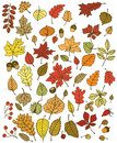 Autumn leaves large set of various types of hand drawn Royalty Free Stock Photos