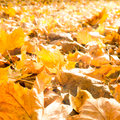 Autumn leaves meadow sunlight Stock Photography