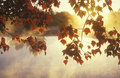Autumn Leaves and Mist, Royalty Free Stock Photo