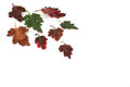 Autumn leaves multi colored on a white background Royalty Free Stock Photos