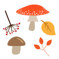 Autumn leaves, mushrooms and berries isolated on white background. Vector image of red and brown mushroom, branch of viburnum and