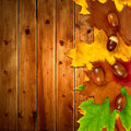 Autumn leaves with oak acorns on wooden background Stock Photos