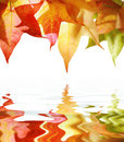 Autumn leaves over water