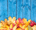 Autumn leaves over wooden background. Copy space. Stock Image