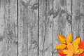 Autumn leaves over wooden background. Copy space. Royalty Free Stock Image