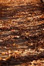 Autumn leaves over wooden bridge Arkivbild