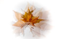 Autumn leaves overlay representing the ephemeral Royalty Free Stock Photography