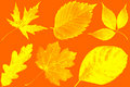 Autumn leaves in paints of abstraction. Royalty Free Stock Photo