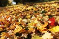 Autumn leaves in park selective focus shallow dof Royalty Free Stock Photography