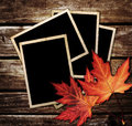 Autumn Leaves and photo frame Royalty Free Stock Photo