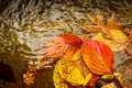 Autumn leaves in the puddle Royalty Free Stock Photo