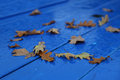 Autumn leaves on rain Royalty Free Stock Photo