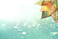 Autumn leaves and  rain water drops background Royalty Free Stock Photo