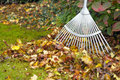Autumn leaves with rake on green garden lawn next to pile of fallen shallow depth of field Royalty Free Stock Image