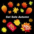 Autumn leaves red, orange, green on black background. The red sh Royalty Free Stock Photo