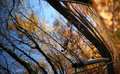 Autumn leaves reflected in a car window Royalty Free Stock Photography