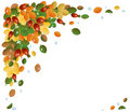 Autumn leaves with rose-hips, background Stock Photo