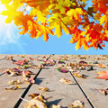 Autumn leaves scattered Royalty Free Stock Images