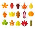Autumn leaves set, isolated on white background. simple cartoon flat style, vector illustration. Royalty Free Stock Photo