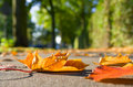 Autumn leaves on sidewalk Stock Image