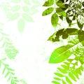 Autumn Leaves Silhouette Grunge Stock Photo